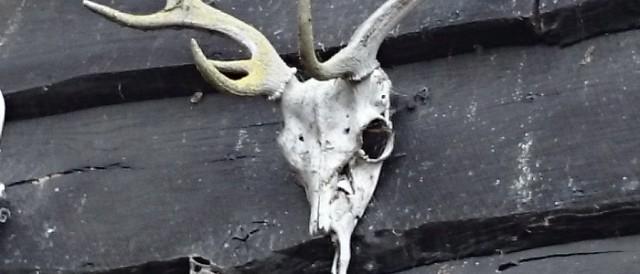skulls-z2-cropped-640x274